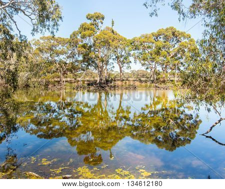 Billabong reflection near the Cygnet River, Kangaroo Island, South Australia.