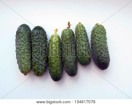 Cucumber - a popular vegetable crops. Eat unripe. Unripe cucumbers taste better.