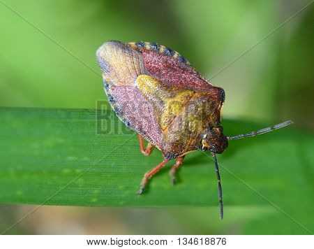 beetle bug herbal large macro plan beetle, bug, colorful,