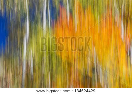 Abstract landscape of colorful autumn forest with bright orange and yellow fall foliage and blue sky.  Image produced by camera motion.