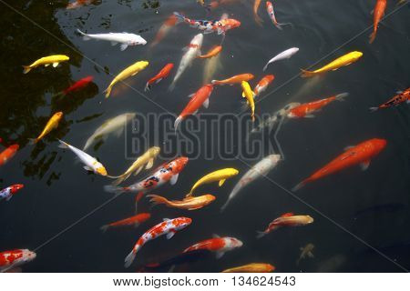 Tropical Exotic Fish underwater. A China travel