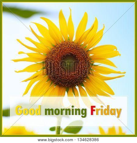 Good Morning Friday - on sunflower background