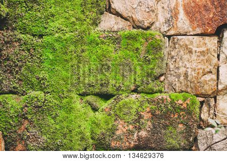 Rock wall with slime. Rustic style Background