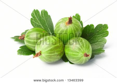 gooseberry,  among green leaves