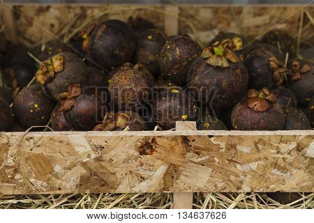 Fresh mangosteen fruit in a wooden crate ** Note: Shallow depth of field