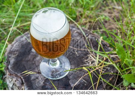 Beer On Tree Stump
