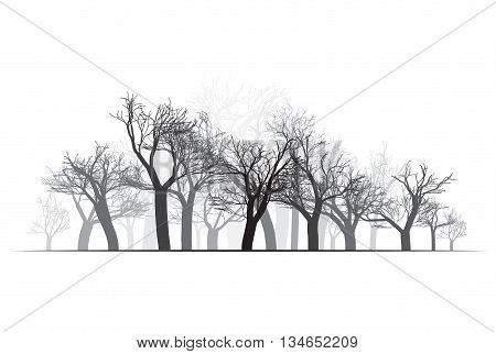Wide Forest Background - vector illustration. Black on white