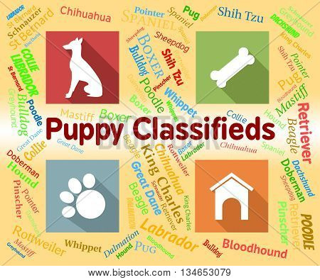 Puppy Classifieds Shows Doggy Ad And Canines