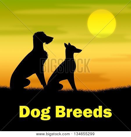 Dog Breeds Shows Pasture Puppy And Doggie