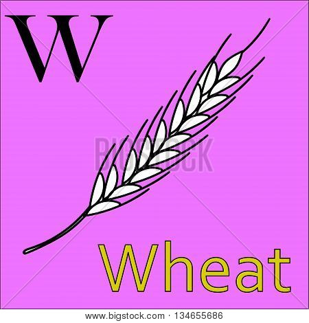 W letter. Object capital alphabet. Colorful font. Uppercase. Vector illustration. Worksheet, Exercises for kids, Coloring book. Illustration of alphabet letters with beautiful clip arts wheat