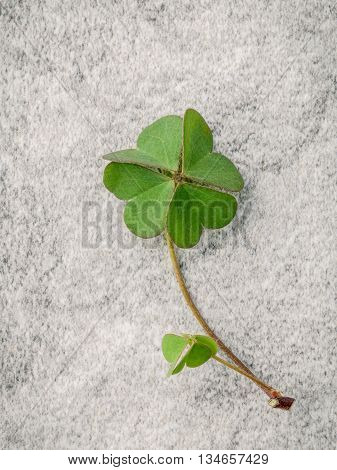 Closeup Clovers Leaves  On Stone Background. The Symbolic Of The Four Leaf Clover The First Is For F