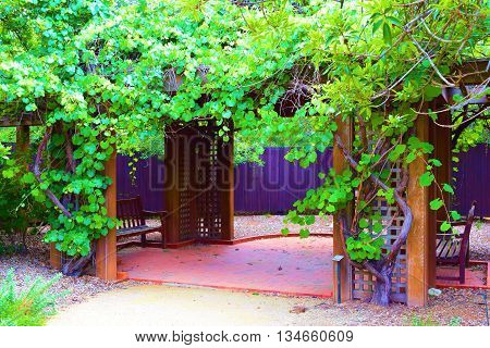 Outdoor Wooden Gazebo surrounded with grapevines taken in a residential garden