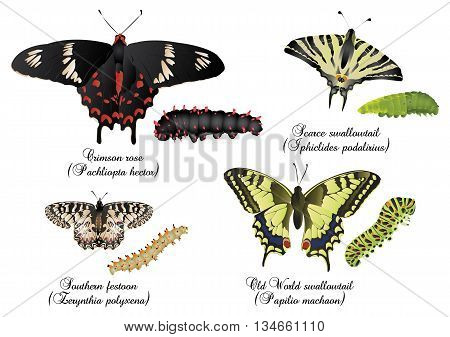 It is illustration of amazing butterflies set - swallowtails.