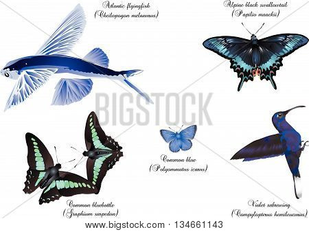 It is illustration of amazing nature set - blue wing.