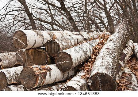The Birch Firewood