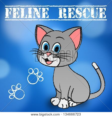 Feline Rescue Represents Domestic Cat And Cats