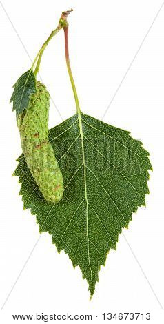 Catkin And Green Leaf Of Birch Tree Isolated