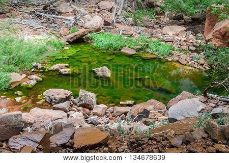 Emerald Pool In Zion National Park In  Utah