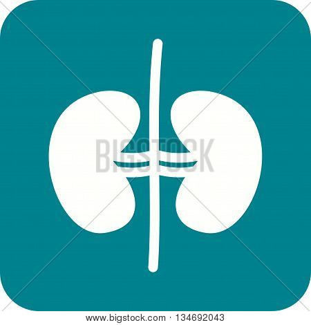 Kidney, human, urine icon vector image. Can also be used for human anatomy. Suitable for mobile apps, web apps and print media.