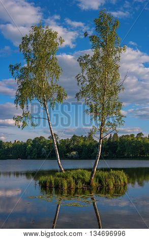 Summer landscape in the Palace of Gatchina park. TTwo birch trees are growing on a small island in the middle of the lake. Birch trees reflected in the water. Gatchina St. Petersburg Russia.