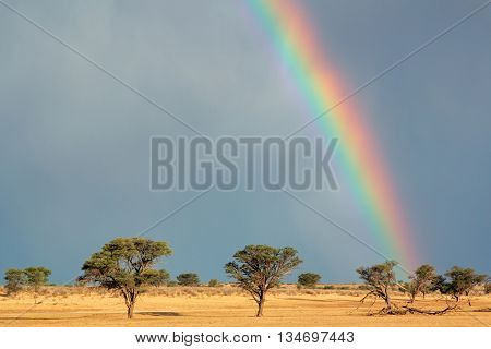Desert landscape with a colorful rainbow in stormy sky, Kalahari desert, South Africa