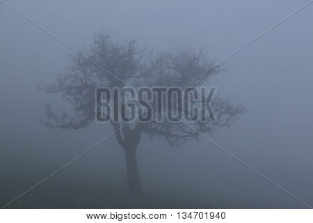 lonesome tree in the mist in autumn