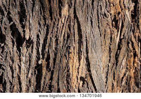 Close up of tree trunk texture.Nature background. Selective focus