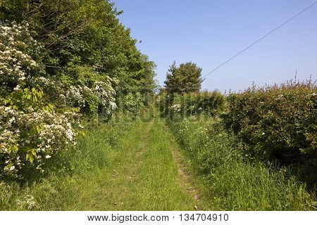 A scenic bridleway with mixed hedgerows in the yorkshire wolds under a clear blue sky in summer