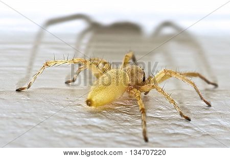 A Close up photo of a Creepy Spider