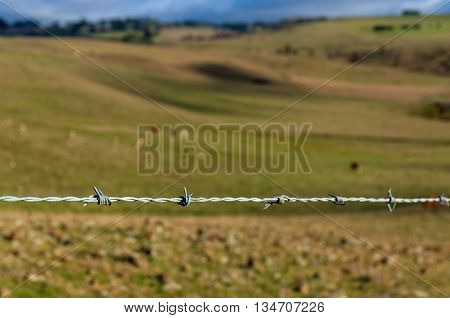 Barbed wire close up against blurred cattle pasture on the background. Agriculture landscape. Selective focus