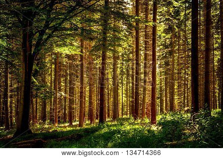 Sunlight breaking through a crowded forest and lighting up the shade