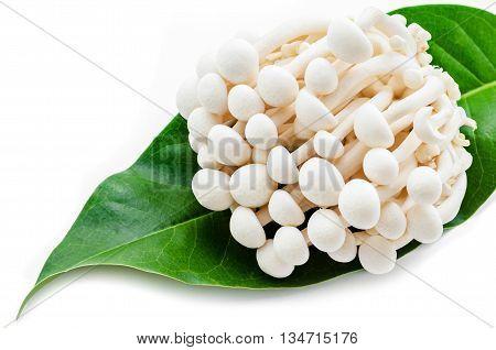 Fresh White Hon Shimeji or White Beech Mushroom in green leaf on white background.