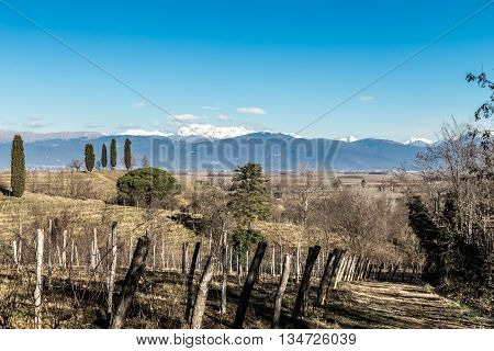 Vineyard In Late Winter