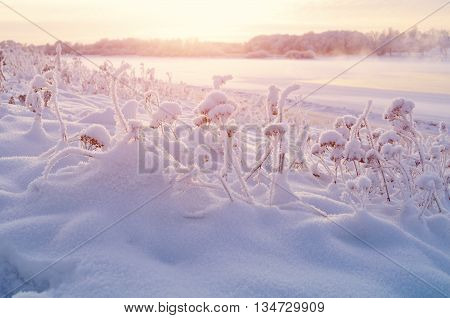 Winter landscape - frosty winter plants on the background of sunset and winter river cold mist landscape winter view. Selective focus at the frozen plants. Winter colorful landscape view.