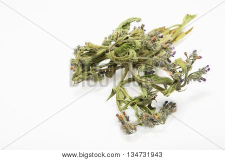 Dried flowers and leaves on Common Comfrey Symphytum officinale on a white background