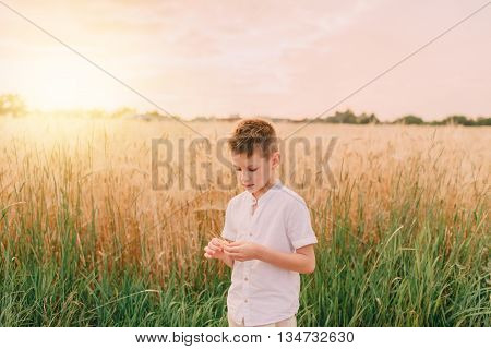 on the field with mature wheat walks a little boy in a white shirt