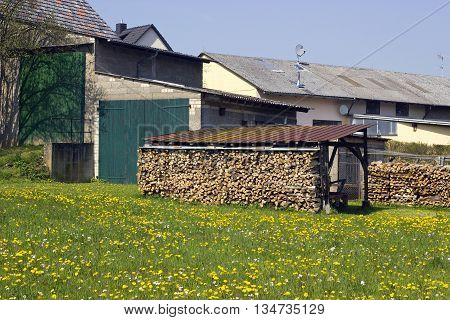 Picture from heap of wood in Springtime