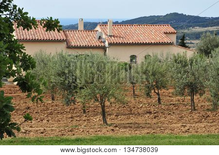 Le Castellet France - april 20 2016 : olive tree and the picturesque village in spring
