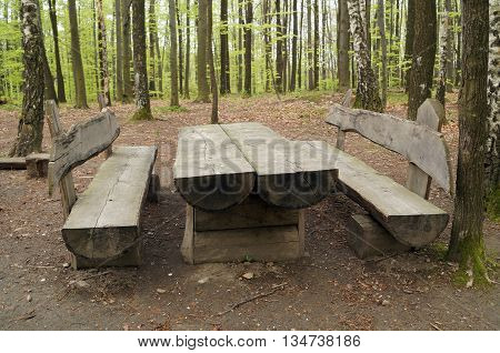 Wooden table and bench in a birch grove