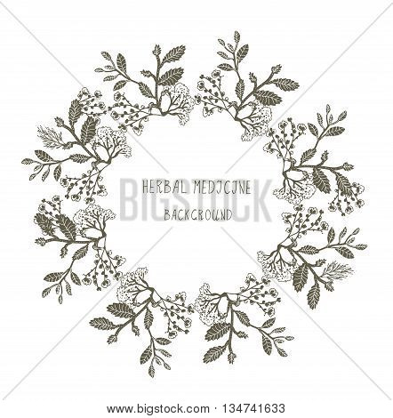 Herbal medicine label or frame sketchy design with plants. Vector graphic illustration.