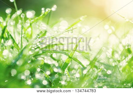 Soft focus Fresh morning dew on spring grass natural background - close up with shallow DOF.