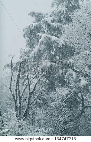 winter, trees under snow