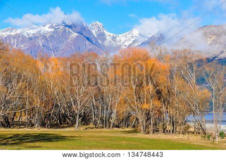 Colorful Landscape In Glenorchy, New Zealand