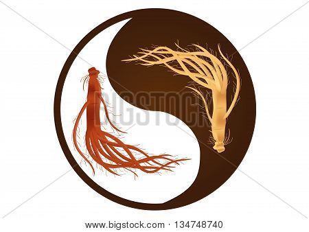 yin yang ginseng vector , ginseng of Korea , ancient traditional medicine , red and white ginseng