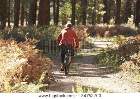 Man mountain biking through a forest, back view