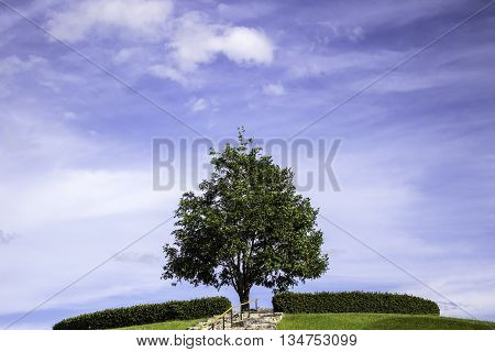 Trees on the hill with a sky background.