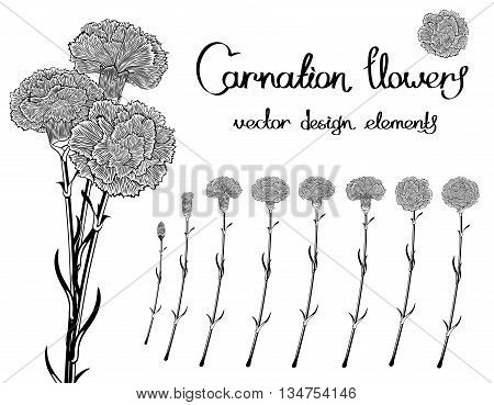 Vector set isolated of flowers carnations. Black and white bundle of eight unique blossom in engraving style. In addition a bouquet of three cloves.