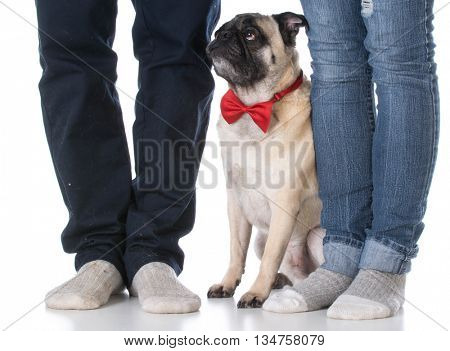 mixed breed dog sitting between man and woman's feet on white background