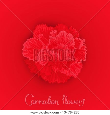 Juicy burgeon blossom of carnation. Red picture postcard with a flower. Vector design element