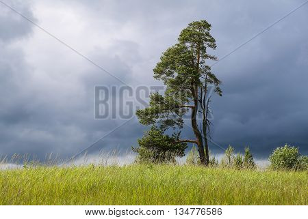 Landscape with lonely tree and dark stormy sky. Tree branches grow from one side only.